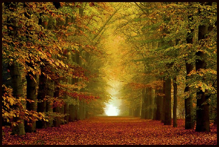 Park de OUde Warande in Tilburg - 14 van de mooiste herfstlocaties om te fotograferen   Inspiratie   Zoom.nl