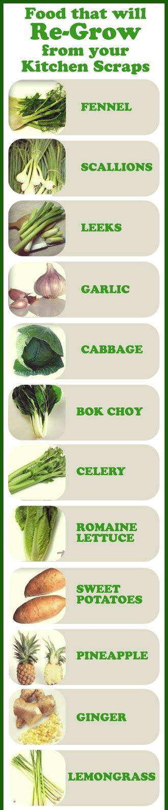 Regrow these foods from kitchen scraps!
