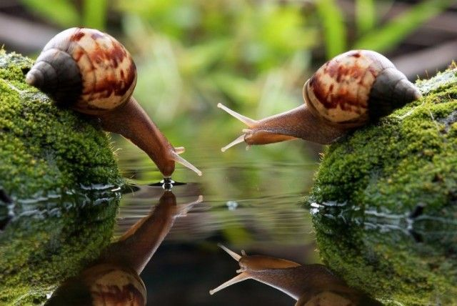 Best images, photos and pictures gallery about snails - how long do snails sleep #snails #snailsleep
