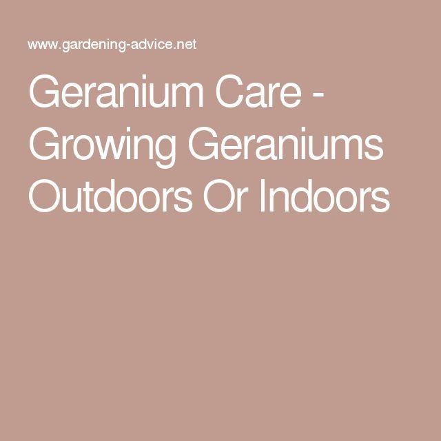 Martha Washington Geraniums Care: Best 25+ Geranium Care Ideas On Pinterest