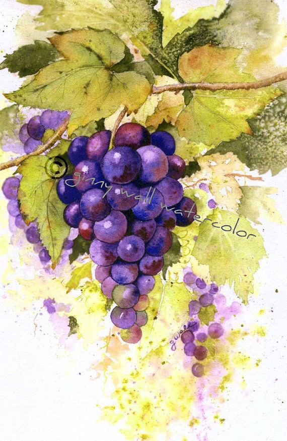 Matted PRINT Grapes  by Ginny Wall by AllNatureSings on Etsy, $15.00
