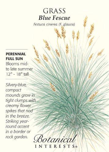 Blue-Fescue-Grass-Seed-50-grams-Perennial