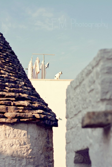 A cat on the roof  Alberobello, Apulia.