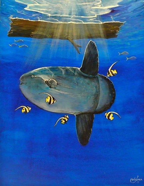 Mola Mola - Johnny Widmer Art  Visit: https://www.facebook.com/JohnnyWidmerArt