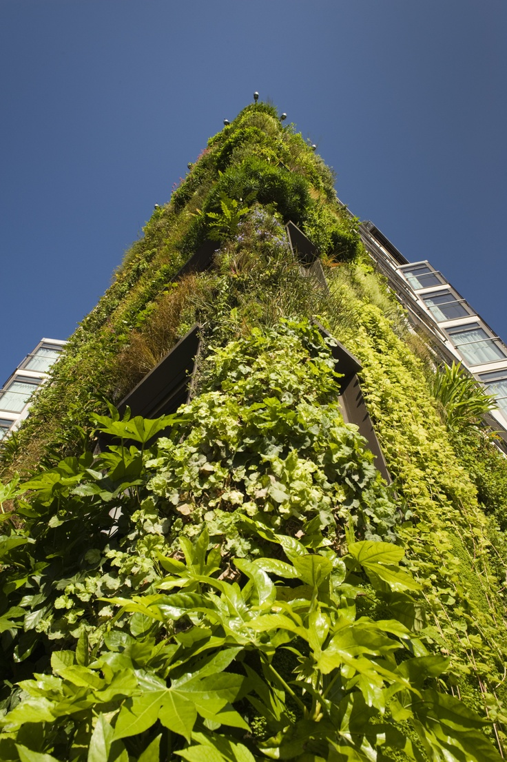 19 best Our Living Wall images on Pinterest | Living walls, Vertical ...