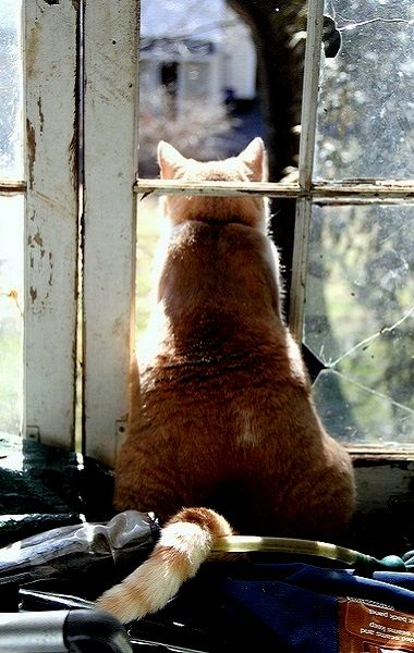 Leo's lookout..   Flickr - Photo by judecat (back on the farm)