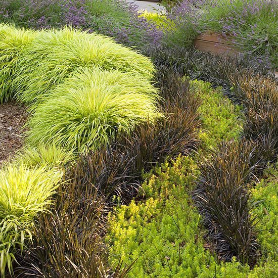 242 best ornamental grasses images on pinterest for Landscaping ideas using ornamental grasses