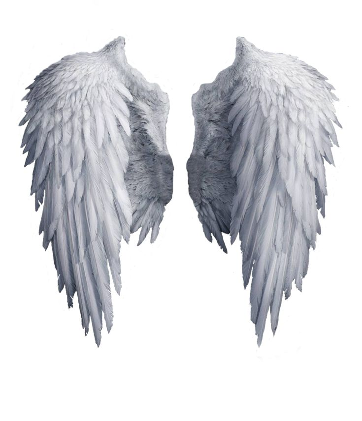 Angel wings stock PNG by Shadow-of-Nemo.deviantart.com on @DeviantArt