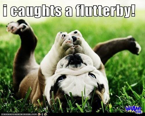 english bulldog meme - Google Search