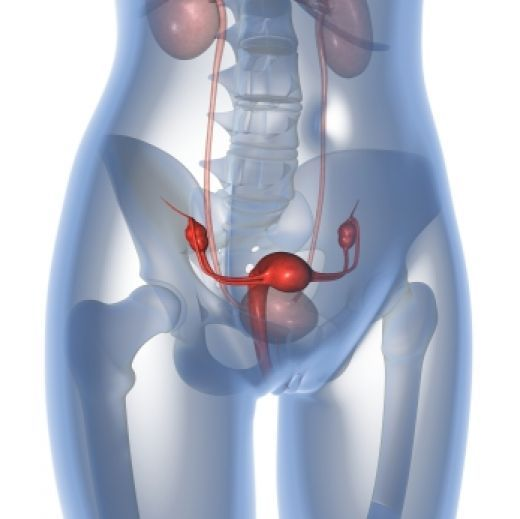 23 best images about Female Anatomy on Pinterest | Rivers ...