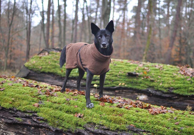 Nie wieder ein nasser Hund in der Wohnung - Das Dryup Cape von Actionfactory