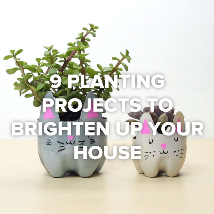 9 Planting Projects To Brighten Up Your House // #plants #planting #garden #home #decor #Nifty