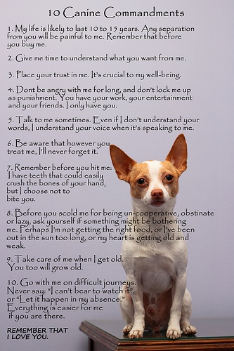 So true! All dog-lovers must read. :) || 10 Canine Commandments