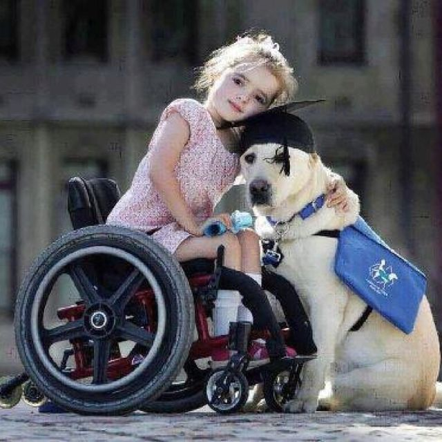 Graduating service dog. They're heroes in my book. :-)