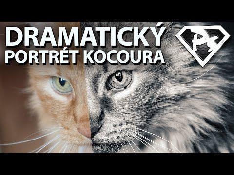 V tomto videu si ukážeme, jak našim roztomilým domácím zvířatům vyrobit pamětní dramatické foto hodné zarámování | Photoshopové Orgie
