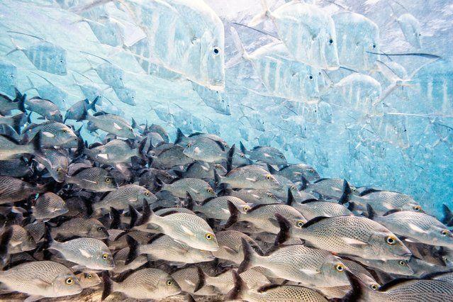 The disappearing fish by Iago Leonardo, Spain | petnook.in #petnook