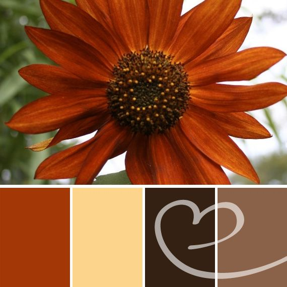 Beautiful Burnt Orange Color Palette Used In A Labor Day