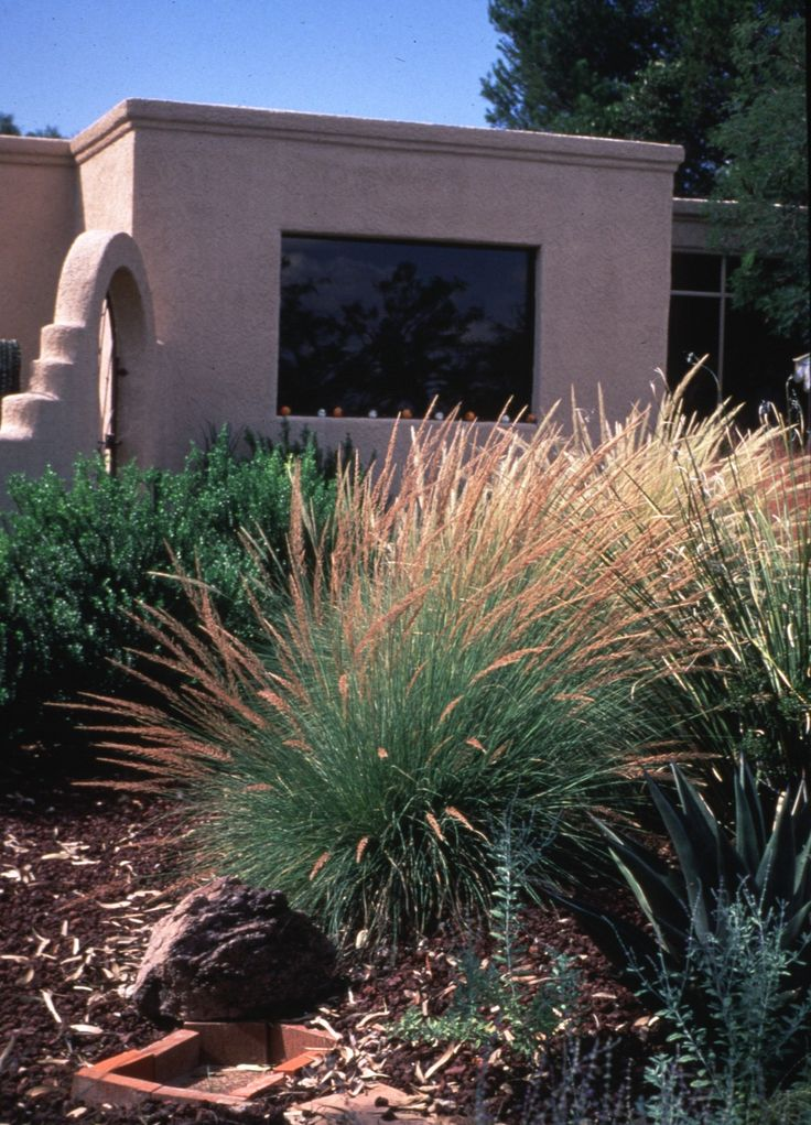 looking for waterwise ornamental grasses that look great