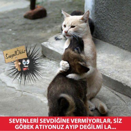 Sevenlerin Çilesi… #sosyalöküz#ferhat#sevda#leyla#mecnun#şirin#romantik#manita#sevgi#pisipisi#flört#sarıl#kedi#sevgili#kavuşma#karasevda#aşk#kediler#köpekler#köpek