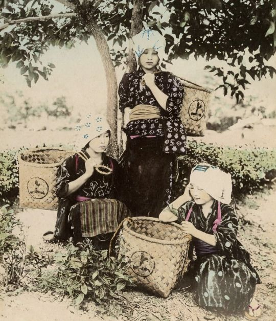 Tea gatherers. Late 19th century, Japan. Hand-colored photo The Kimono Gallery