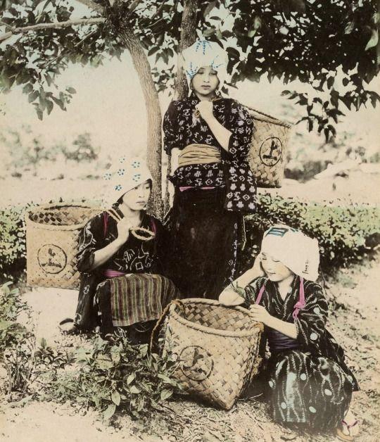 Tea gatherers. Late 19th century, Japan. Hand-colored photo The Kimono Gallery