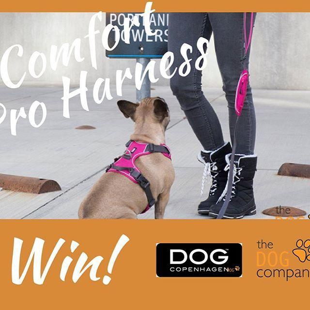 Wil jij een Dog Copenhagen Pro Comfort Harness winnen? Laat dat dan vandaag ten laatste via onze website weten! #win #tuig #dogcopenhagen #thedogcompany #webshop