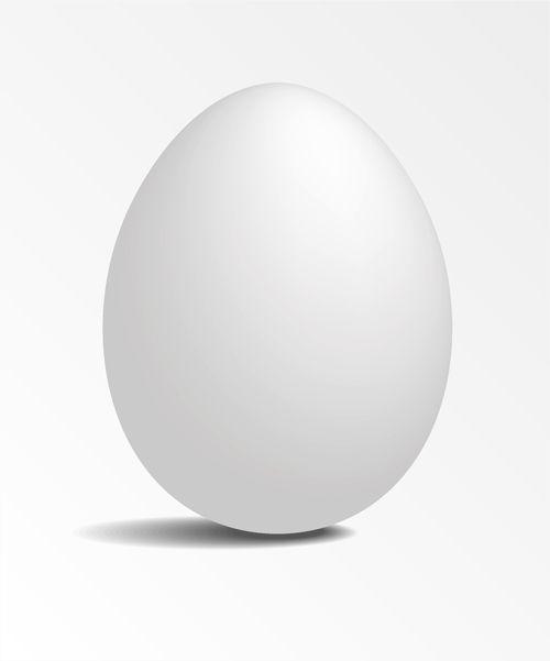 White-Eggs-design-vector2.jpg (500×601)