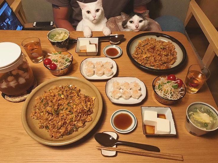 仕事中から考えてた… #納豆キムチ炒飯 ♩美味しい〜❤︎ 《納豆、キムチ、豚挽き肉、ネギ、卵、味付けは醤油、鶏ガラスープの粉、胡椒、各お好みで適量、最後にゴマ油回しかける♩》 白菜と春雨の中華スープ、サラダ、お豆腐、買った海老シュウマイ。 #八おこめ #ねこ部 #cat #ねこ #八おこめ食べ物