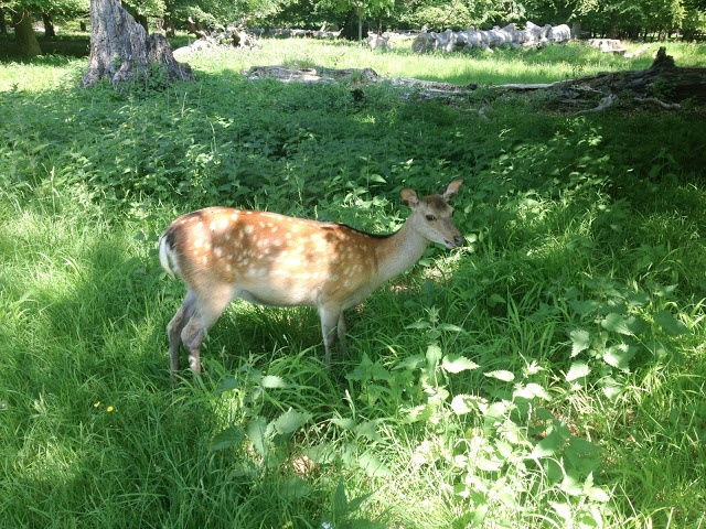 A walk in the Deer Park