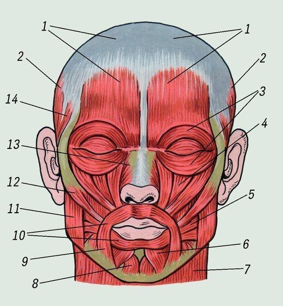 Гимнастика для лица. С чего начать?