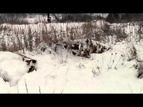 VIDEO0017 - YouTube