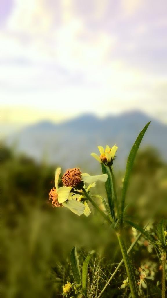 Bunga di tepi jalan ;)