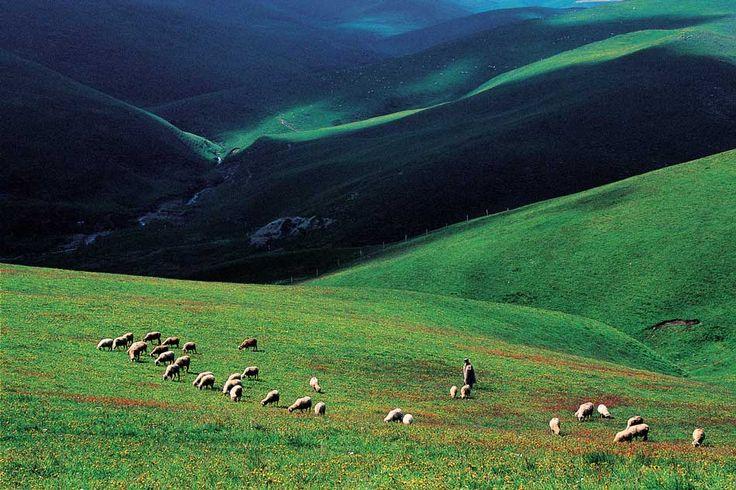Tibetan highlander