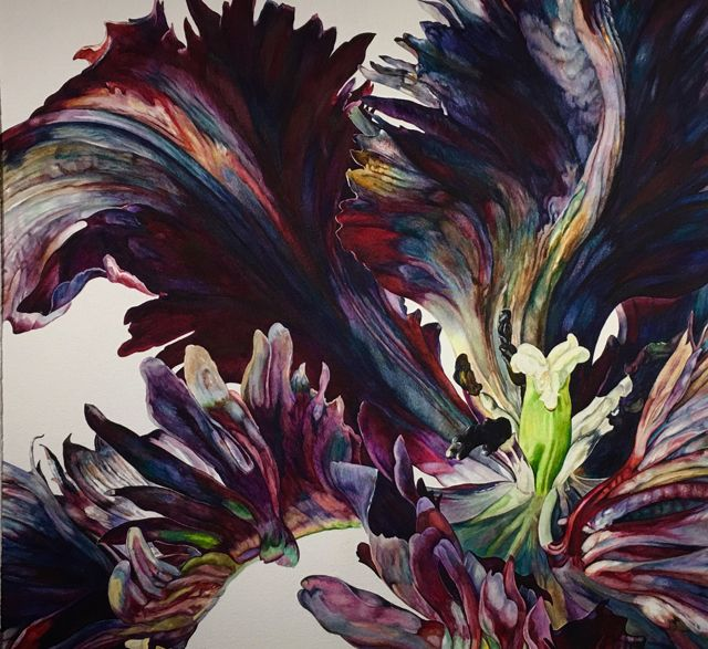 'Black Parrot Tulip' Watercolour by Rosie Sanders.