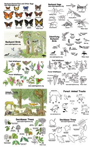 backyard naturalist flashcard kit teach resources