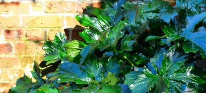 How to Transplant Rhubarb Plants | DoItYourself.com