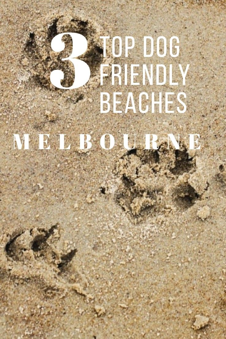 Dog Friendly Beaches in Melbourne. The best beaches for a day out with your dog. Brighton Dog Beach. #dogfriendly #dogbeach #melbourne