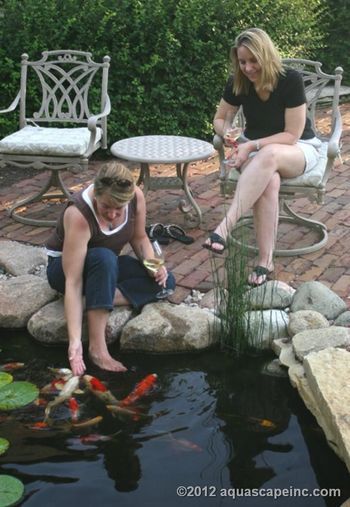 Backyard Pond Fish In Winter :  Fish in my Backyard Pond on Pinterest  Goldfish, Ponds and Koi Ponds