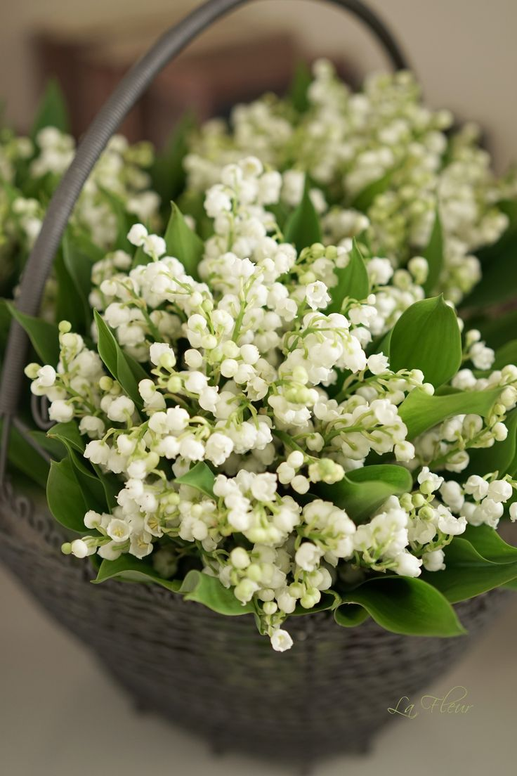 126 best flowers lily of the valley images on pinterest lily of lily of the valley is simply beautiful izmirmasajfo