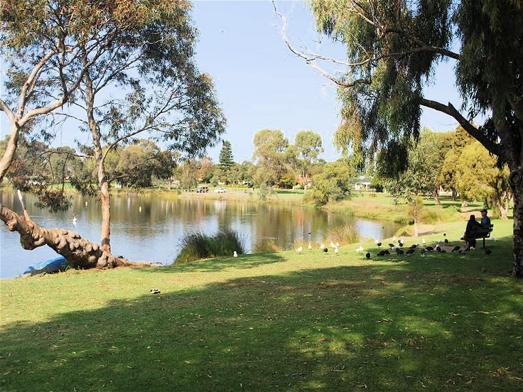 Jackadder Lake, Woodlands Perth Western Australia...close to where I worked for 20 years.. lovely park if you are into birdlife