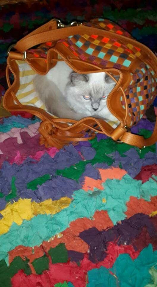 Zoe loves Missibaba handbags ...