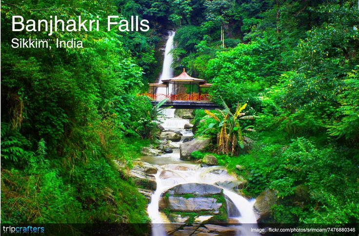 #BanjhakriFalls are located around 10-12 kilometres from the main city, it is a relatively new popular tourist destination. These falls roar down from a height of about 70 feet! Your visit to #Gangtok is incomplete without exploring this miracle of nature.