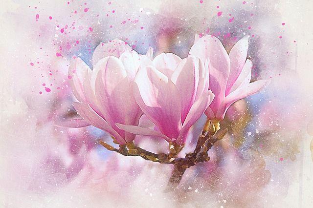 Free Image on Pixabay - Flowers, Magnolia, Art, Abstract
