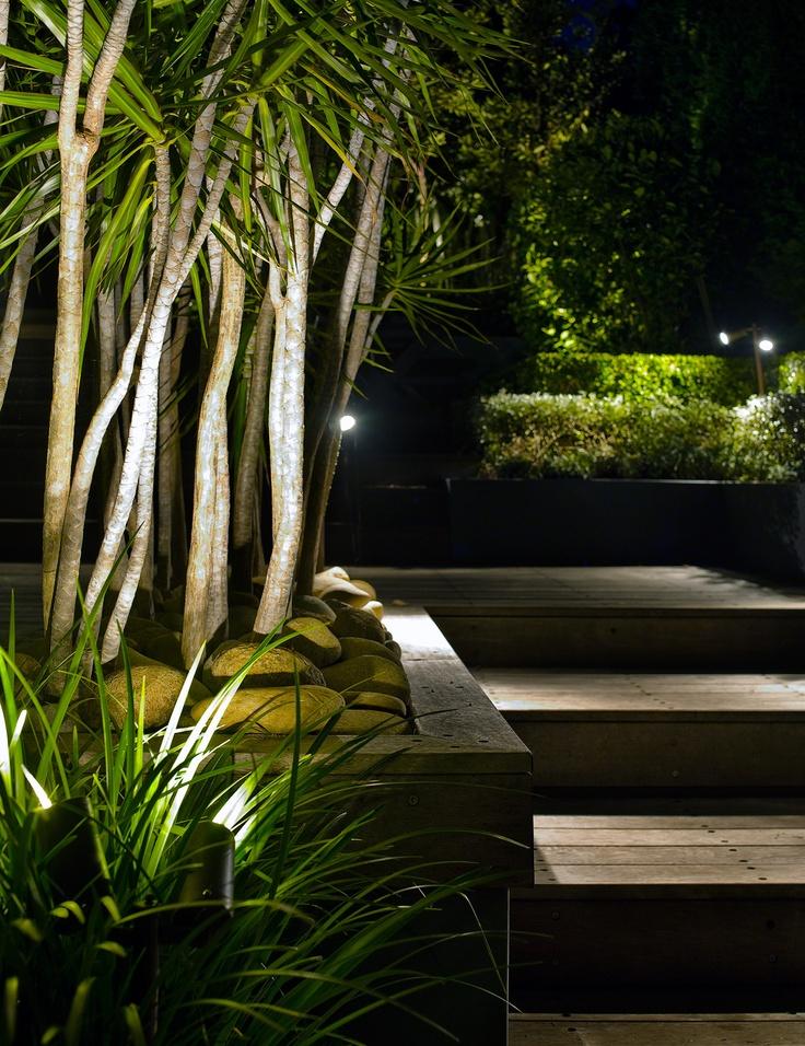 Uplighting Dracena marginata's. Maroubra, NSW Australia. Anthony Wyer + Associates www.anthonywyer.com