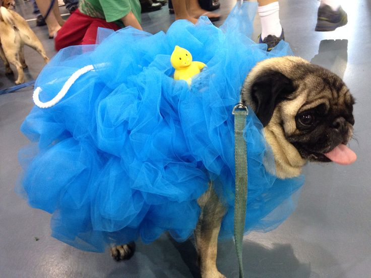 Pug Loofah Dog Costume