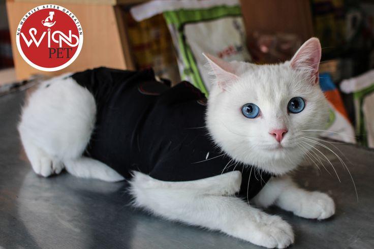 Yavru kedinin beslenme gereksinimleri yetişkin bir kedininkinden farklıdır. Sütten kesilme esnasında kademeli olarak sunulan uygun bir HealthNutrition diyeti büyümesini ve iyi beslenme alışkanlığına sahip olmasını destekleyecektir. Yavru kedinin diyeti, düzgün gelişimi için gerekli olan tüm ihtiyaçları karşılamalıdır. Doğumda, bebekler iyi bir bağışıklık sistemi için gerekli olan annesinden gelen ağız sütünü emerler. Yaklaşık 5 haftalık olana kadar sindirim sistemi anne sütünü sindirmek için…