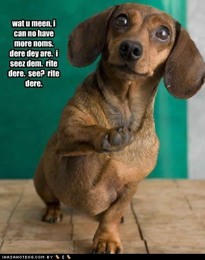 Doxies!!!!