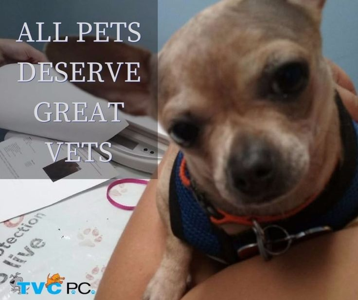 Our passion is serving your pet at every stage of life. With our digital X-rays ultrasounds surgical suite dental suite pharmacy and more we offer a full range of preventative and diagnostic care.  http://www.turnpikeveterinaryclinic.com/service . . . #turnpikeveterinaryclinic #queens #ny #vetclinic #animalclinic #longisland #cats #dogs#compassionate #animalhospital #puppies #kittens #housecalls #veterinarian