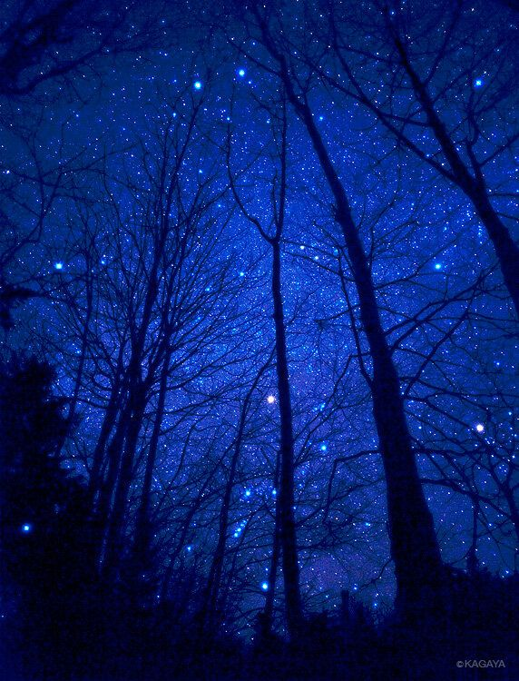 Starry Night ... the beauty of silhouetted trees and the fire and ice of a winter sky