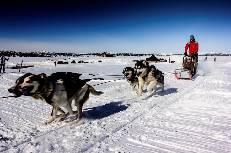 Try dog sledding with our friendly huskies and Alaska Malamutes in a fantastic…